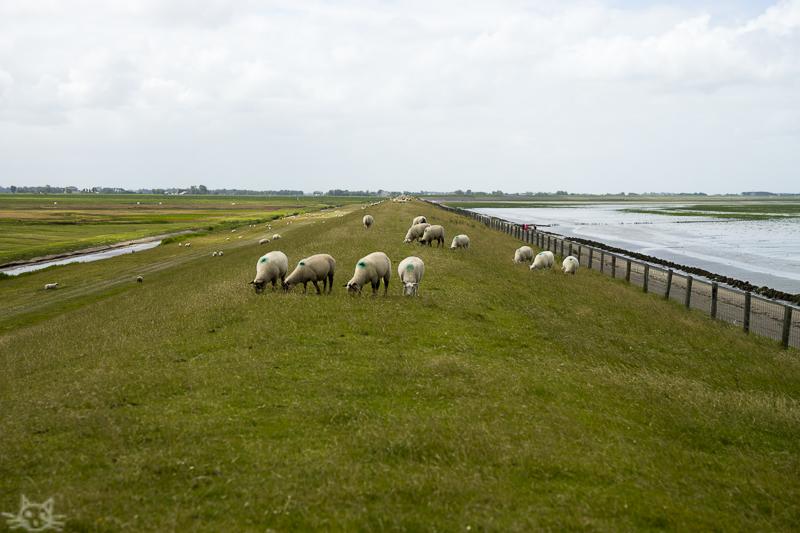 Friesland300715-5