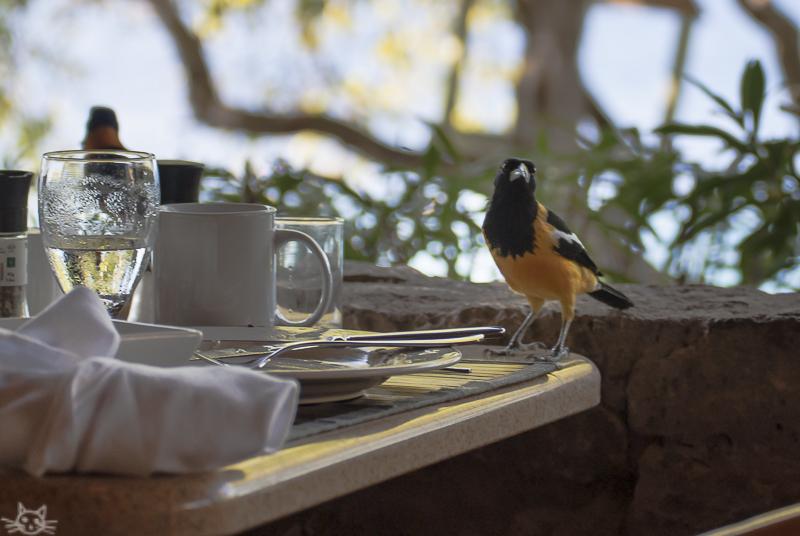 Vogelgelb